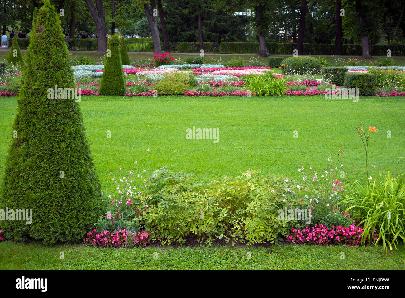Green clipped manicured lawn with pyramidal bush. Space for your text Stock Photo