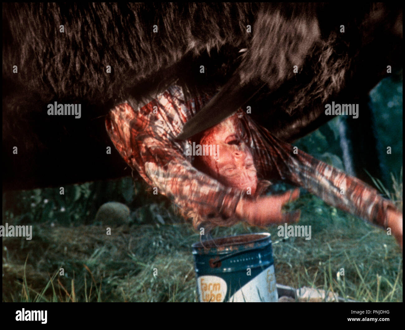 Spider Invasion Stock Photos   Spider Invasion Stock Images - Alamy a521702e30a5