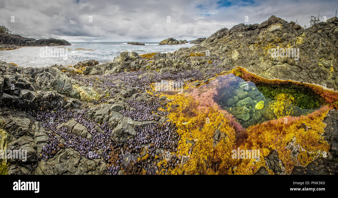 Haida Gwaii tidal pool panoramic - Stock Image