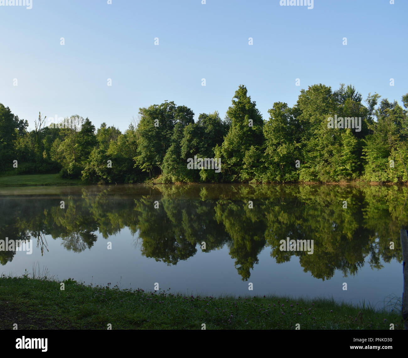 Mirror-like reflection of green tree-lined shore in a still lake on a sunny morning  with blue skies and touches of fog. Stock Photo