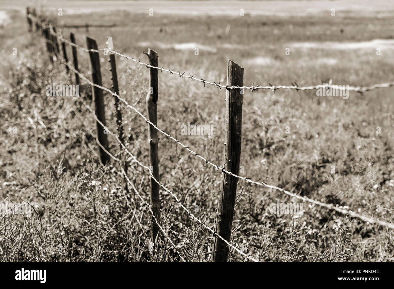 Black & white Sepia tone view of barbed wire fence; central Colorado; USA - Stock Image