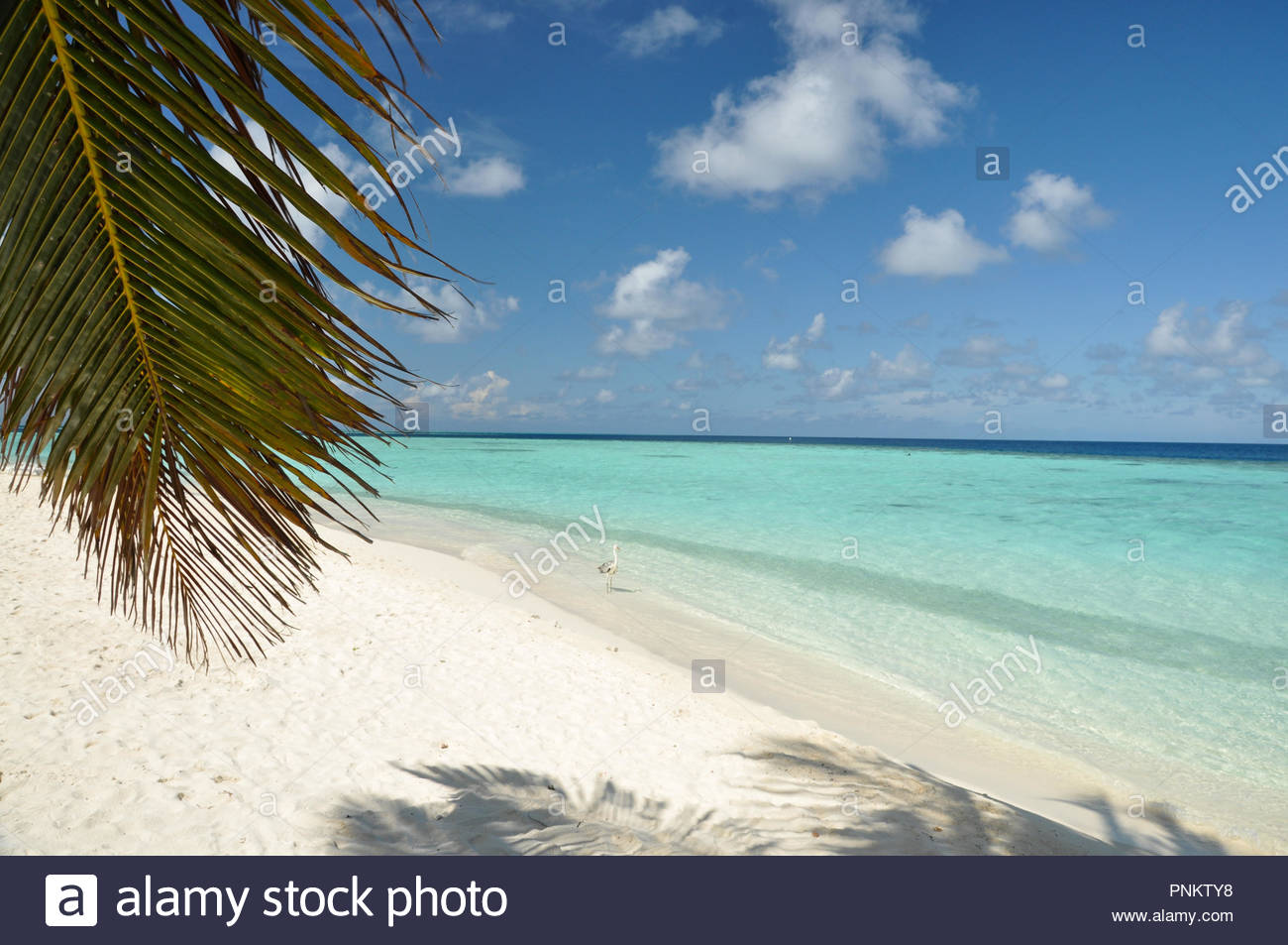 maledives malediven holiday - Stock Image