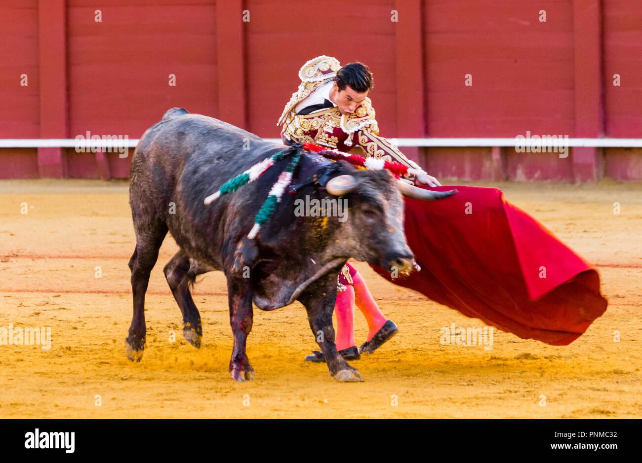 Bull with matador, bullfighting, bullring Plaza de Toros de la Real Maestranza de Caballería de Sevilla, Seville, Andalusia - Stock Image