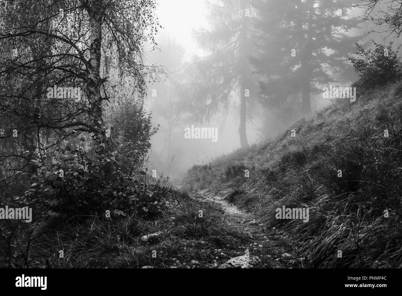 A forest path in Trentino - Italy - Stock Image