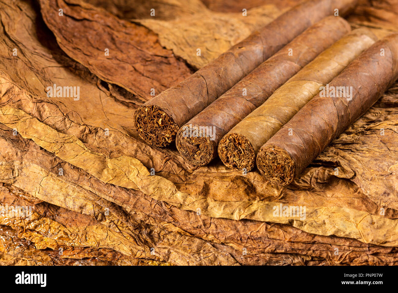 group of cigars on tobacco leaves - Stock Image