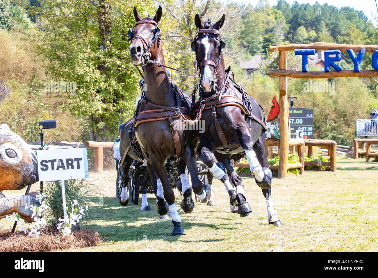 Tryon, USA. 22nd September 2018. Boyd Exell. AUS. FEI World Team and Individual Driving Championships. AUS. Day 11. World Equestrian Games. WEG 2018 Tryon. North Carolina. USA. 22/09/2018. Credit: Sport In Pictures/Alamy Live News Stock Photo
