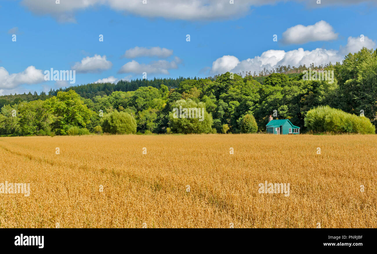 SPEYSIDE WAY OR TRAIL SCOTLAND GREEN FISHING HUT AND OAT FIELD - Stock Image