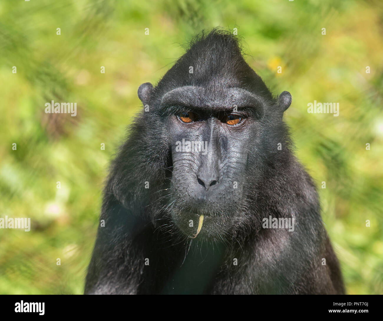 Random Photographs of Animals mostly in captivity captured in Paignton Zoo ,Devon. Mainly of Gorillas and Birds. - Stock Image