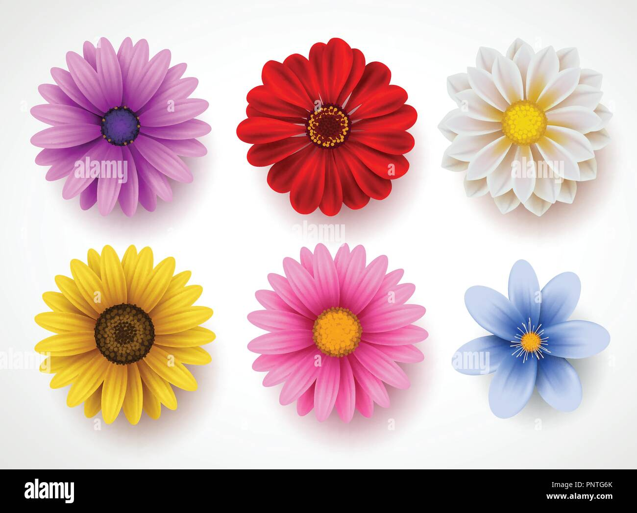 Spring Flowers Colorful Vector Set Isolated In White Background