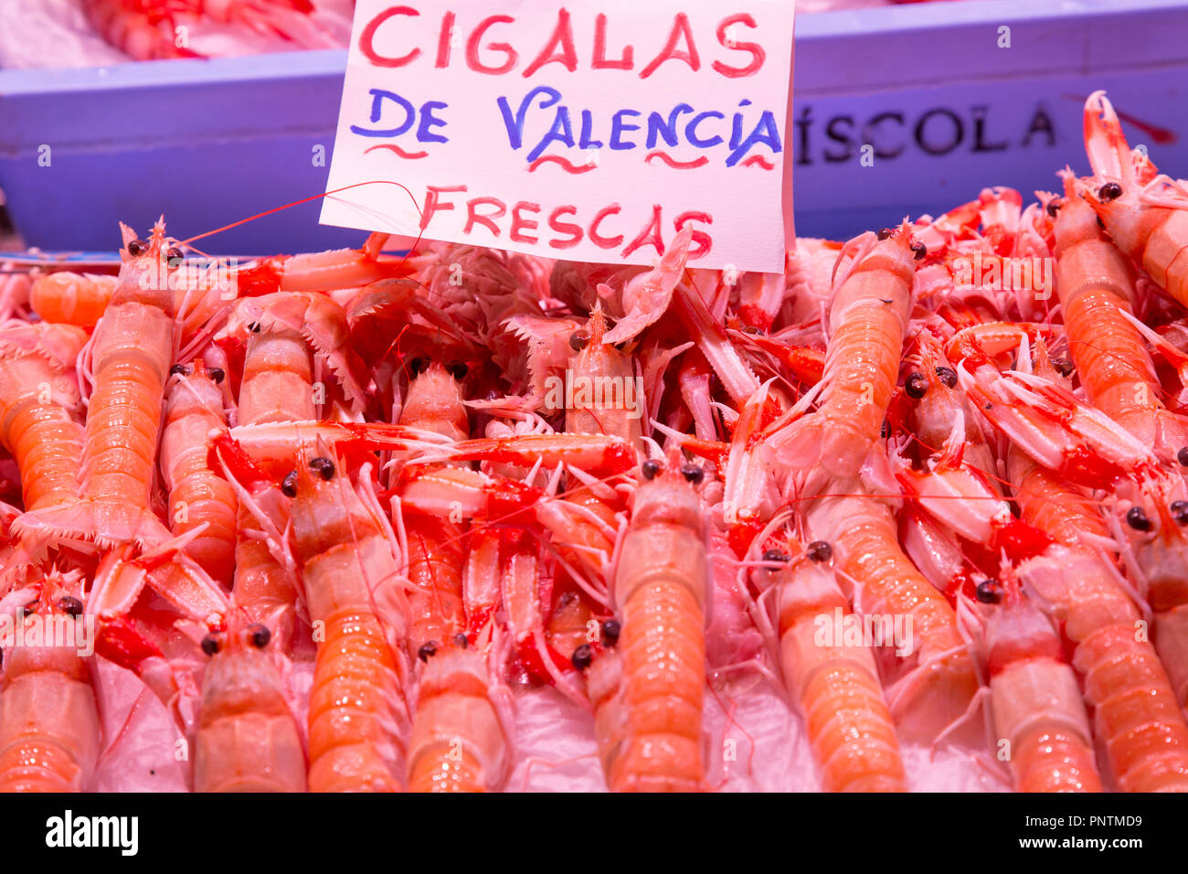 Cigalas langoustines in Mercat Central, the central market in Valencia city, Spain - Stock Image