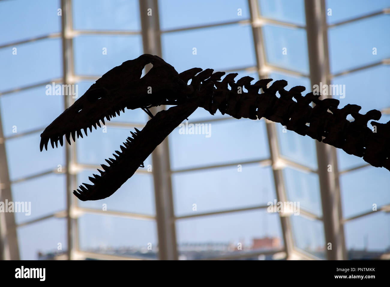 Dinosaur skeletons in the science museum in the City of Arts and Sciences in Valencia, Spain - Stock Image