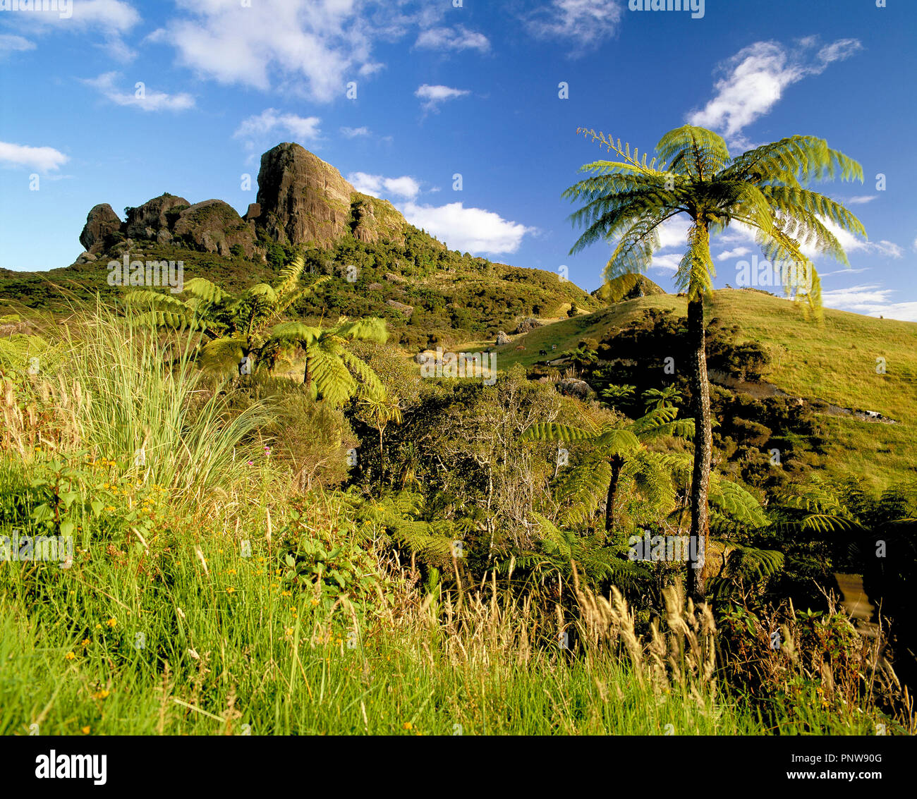 New Zealand. North Island. Landscape with rock outcrop on hill and tree ferns. - Stock Image
