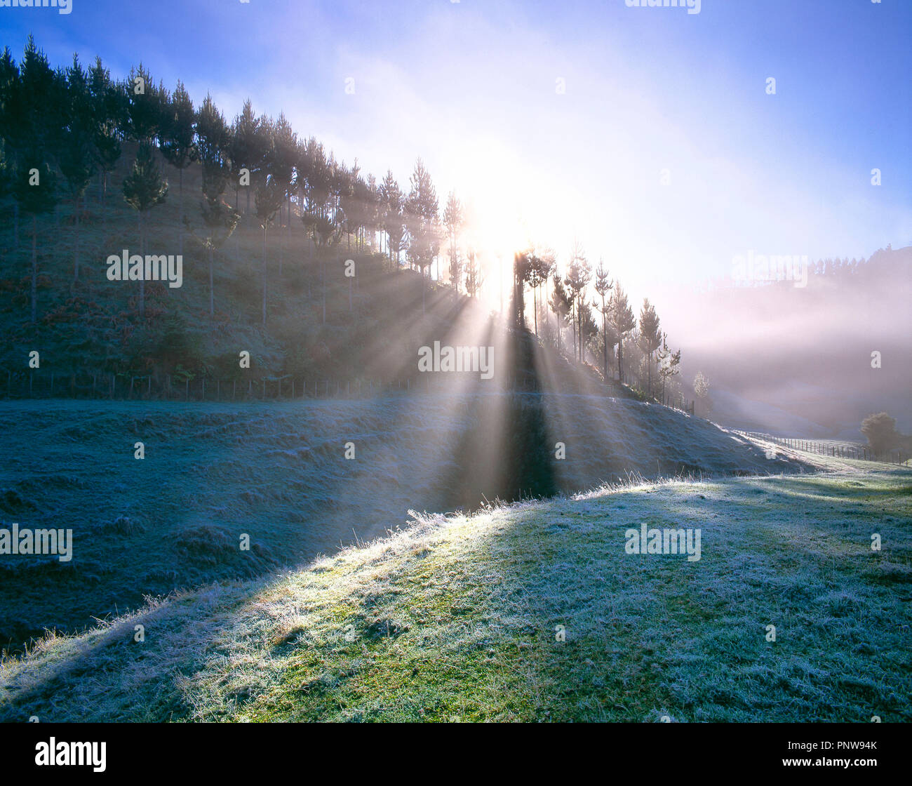 New Zealand. North Island. Hunua. Wintery landscape. Sunrays through trees. - Stock Image