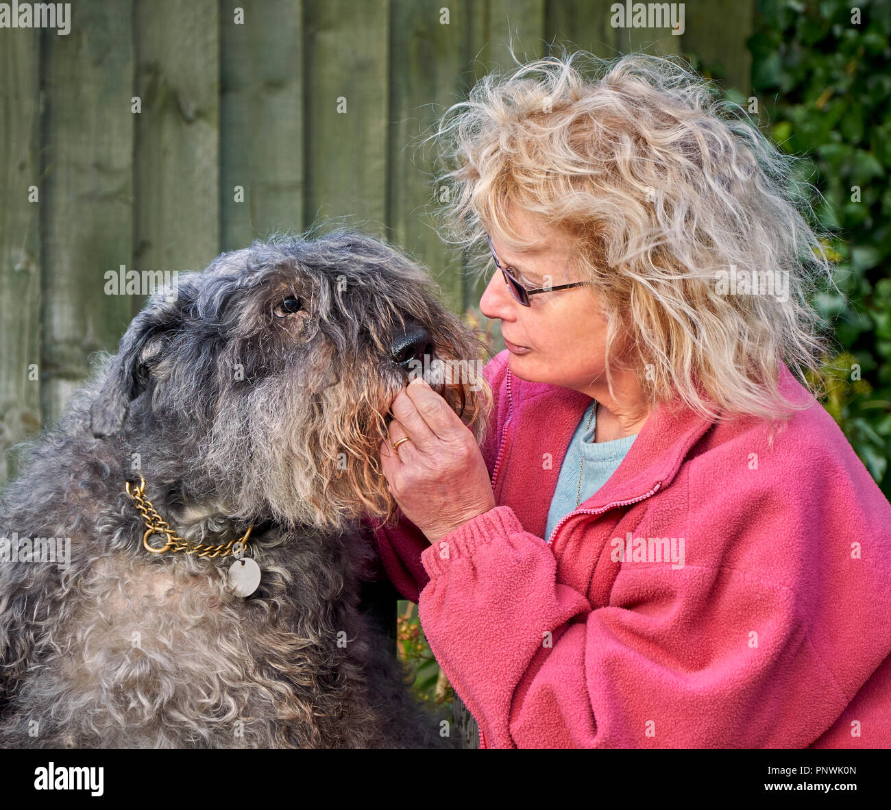 A pet dog (Bouvier des Flandres) and her loving owner share an intimate moment over a biscuit - Stock Image