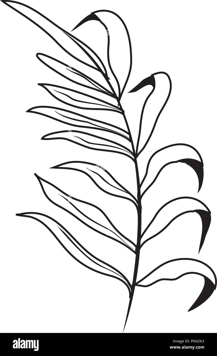Outline Tropical Plant Branch With Nature Leaves Stock Vector Image Art Alamy Alibaba.com offers 1,329 artificial tropical leaves products. https www alamy com outline tropical plant branch with nature leaves image220005047 html
