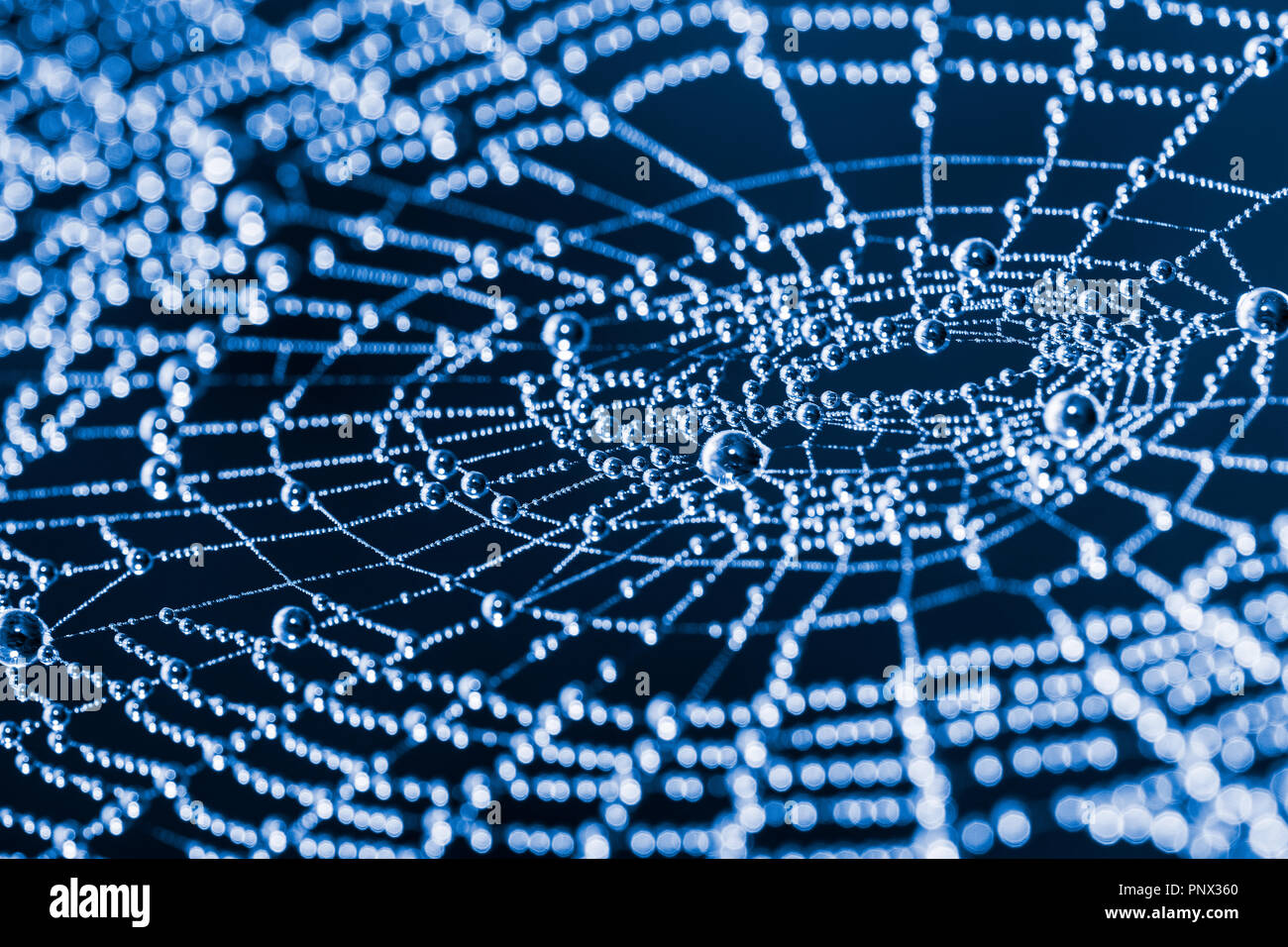 Glittery spider web with pearls from dew drops close-up. Beautiful artistic detail of a wet cobweb in moon light on dark blue night background. Bokeh. - Stock Image