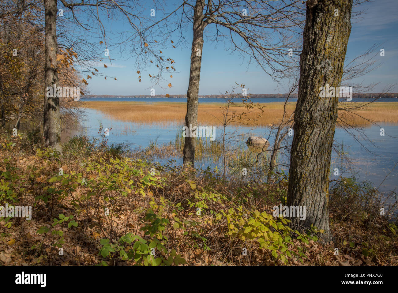 Lake with grasses seen through trees along the shore on a sunny fall day in Father Hennepin State Park in northern Minnesota - Stock Image