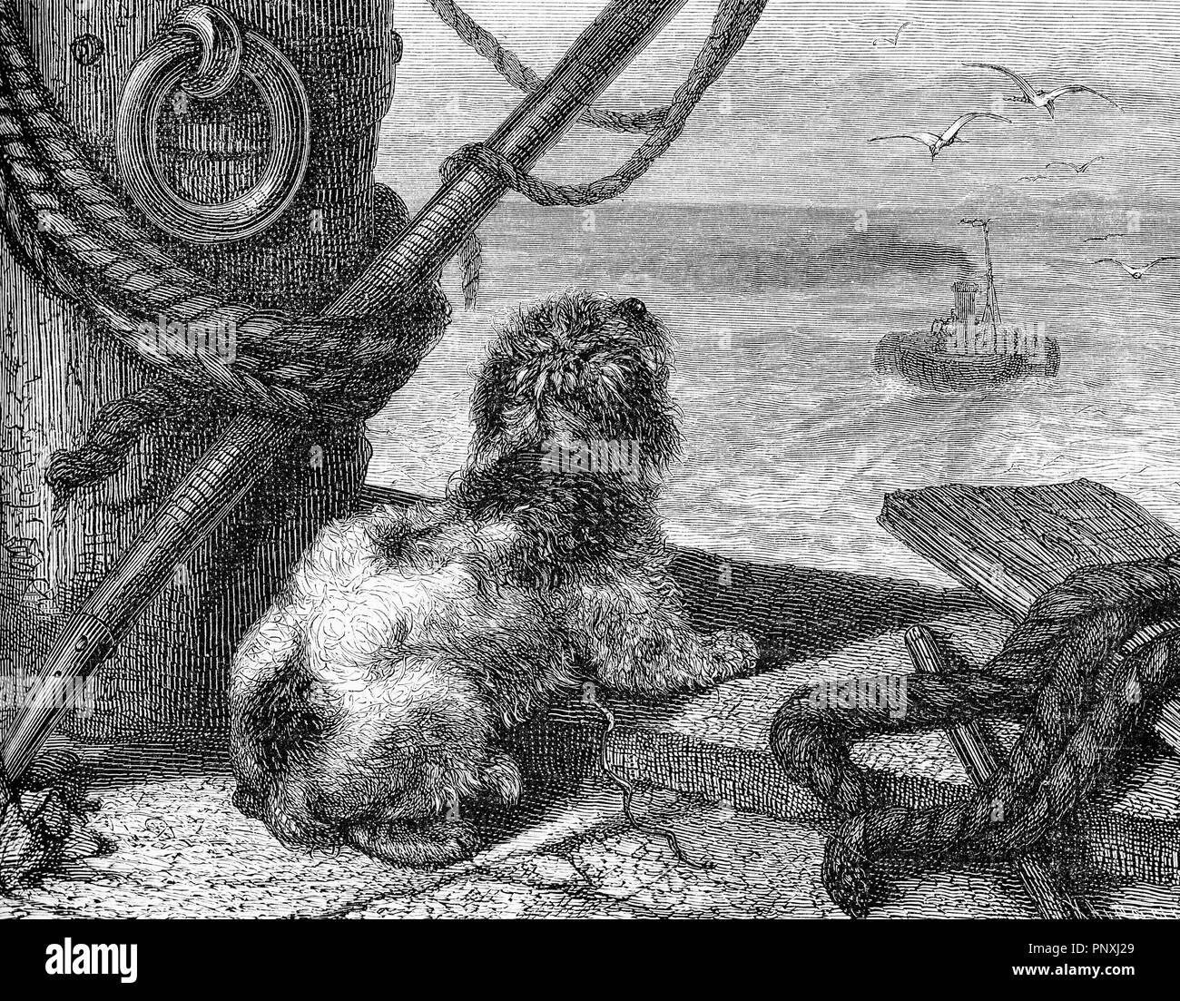 loyal dog on the pier waiting its master comeback from the sea, vintage engraving - Stock Image