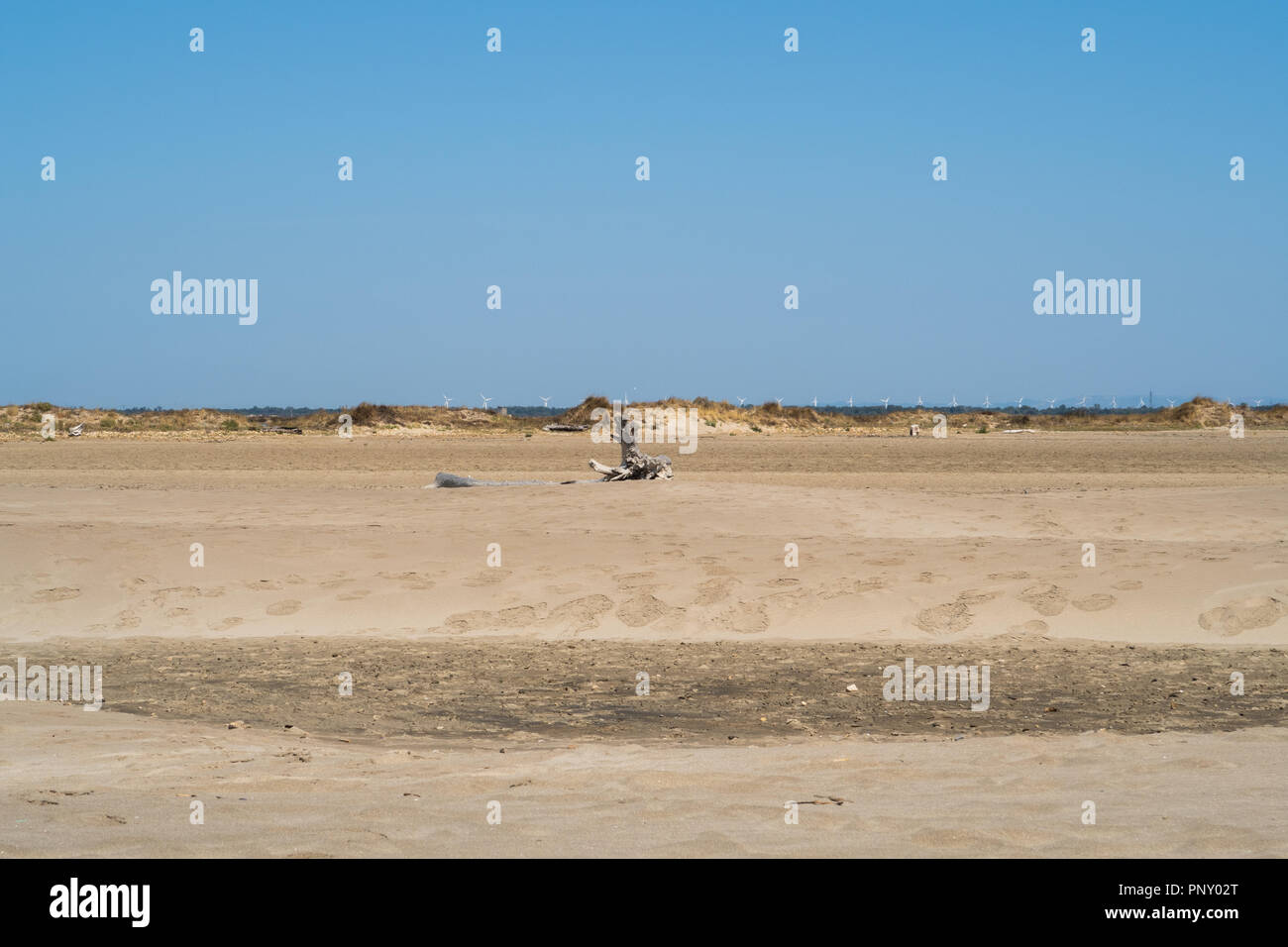 Beach in Provence, France with dead tree trunk and wind wheels in the background. - Stock Image