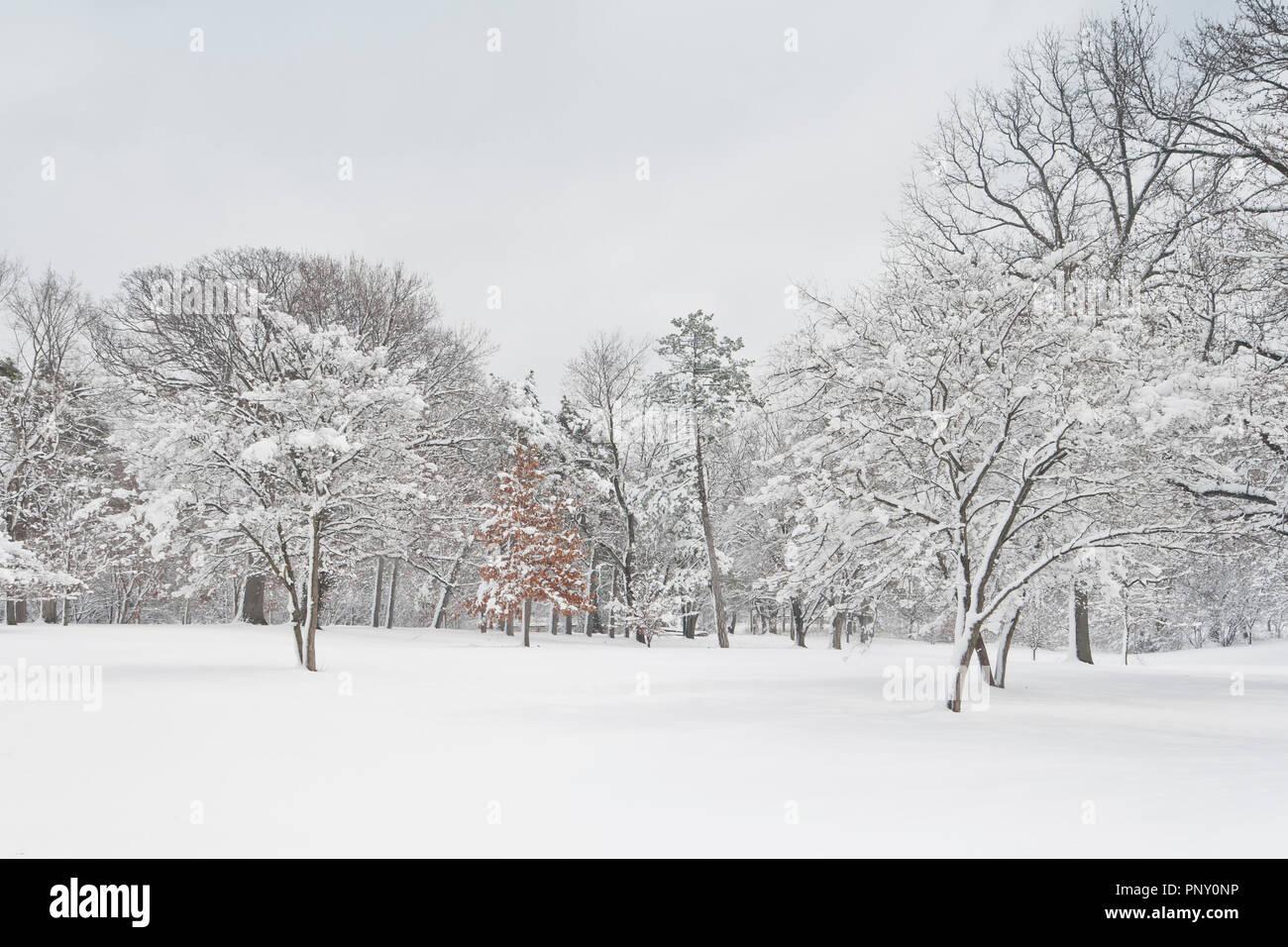Snow Sticking To Trees Stock Photos & Snow Sticking To Trees