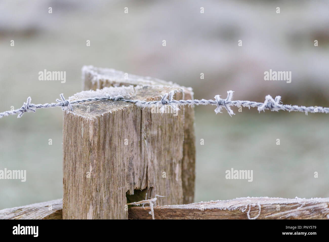 Frosty barbed wire on a rustic wooden fence in Surrey, rural landscape, southeast England, near Pyrford after very low temperatures and freezing fog Stock Photo