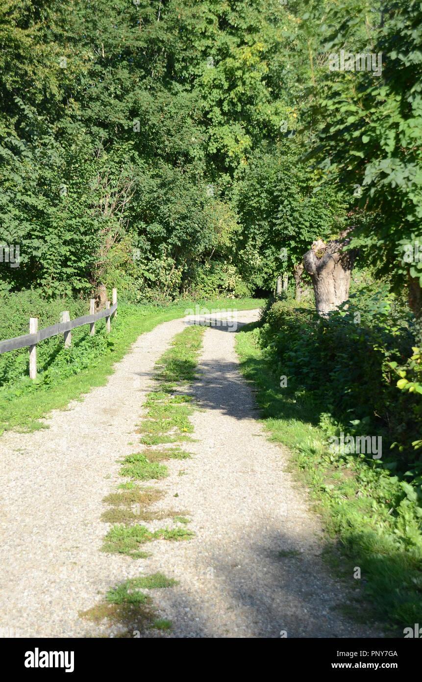 Small unpaved road goes trough dense scrub - Stock Image