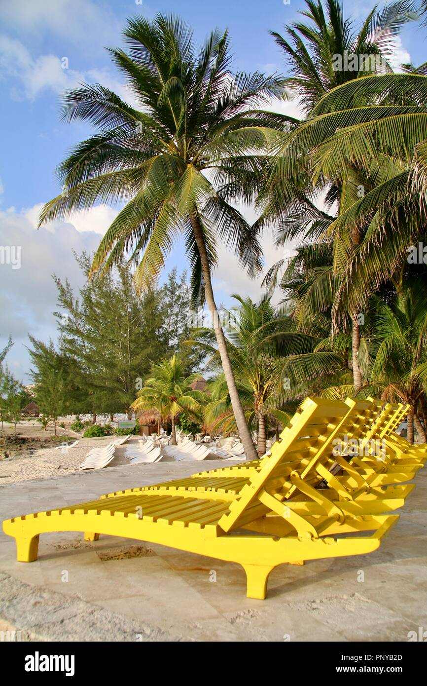 Beachside wooden lounge chairs to with coconut palms on a beach in the Caribbean - Stock Image
