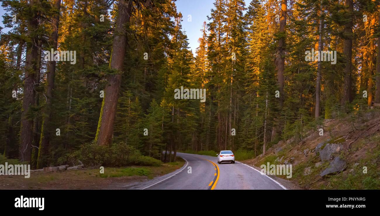 Road amidst towering trees in Yosemite, California - Stock Image