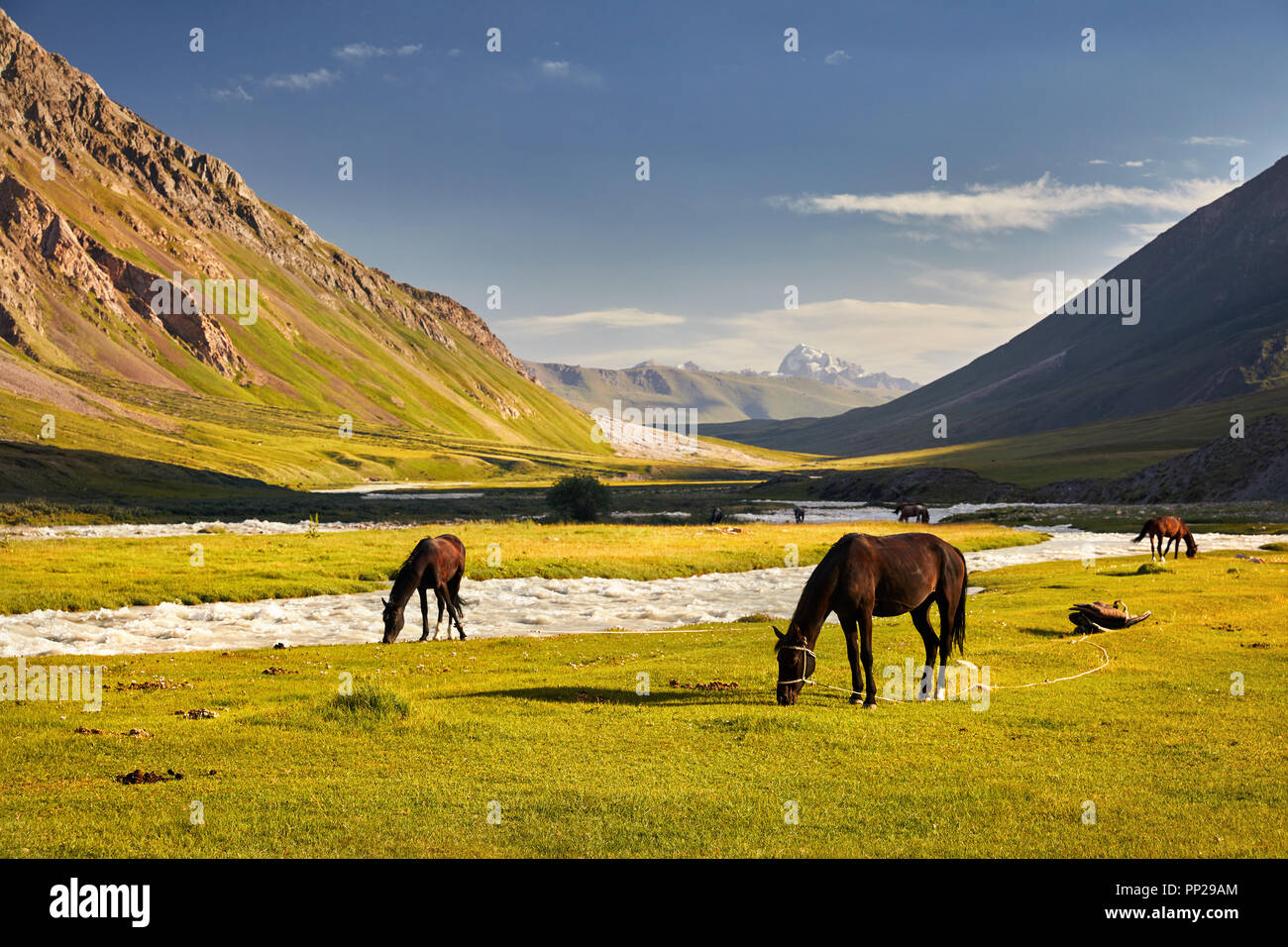 Horses in near the river in Terskey Alatau mountains of Kyrgyzstan, Central Asia - Stock Image