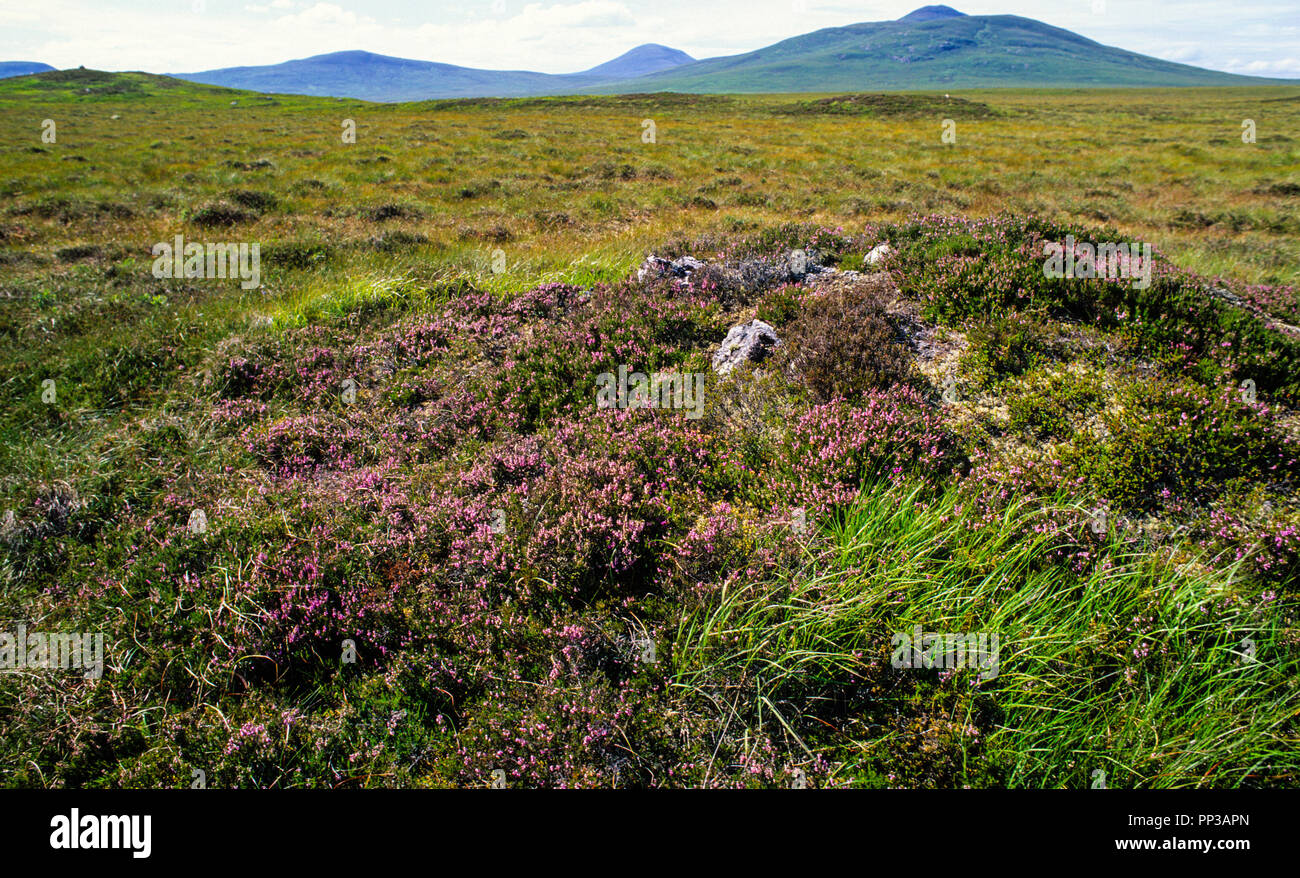 The Flow Country, world's last wild places, Highlands, Scotland, UK,GB. - Stock Image