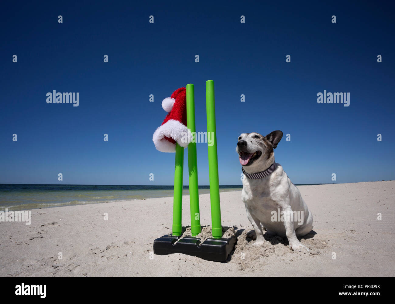 Wicket Keeper Dog for Christmas - Stock Image