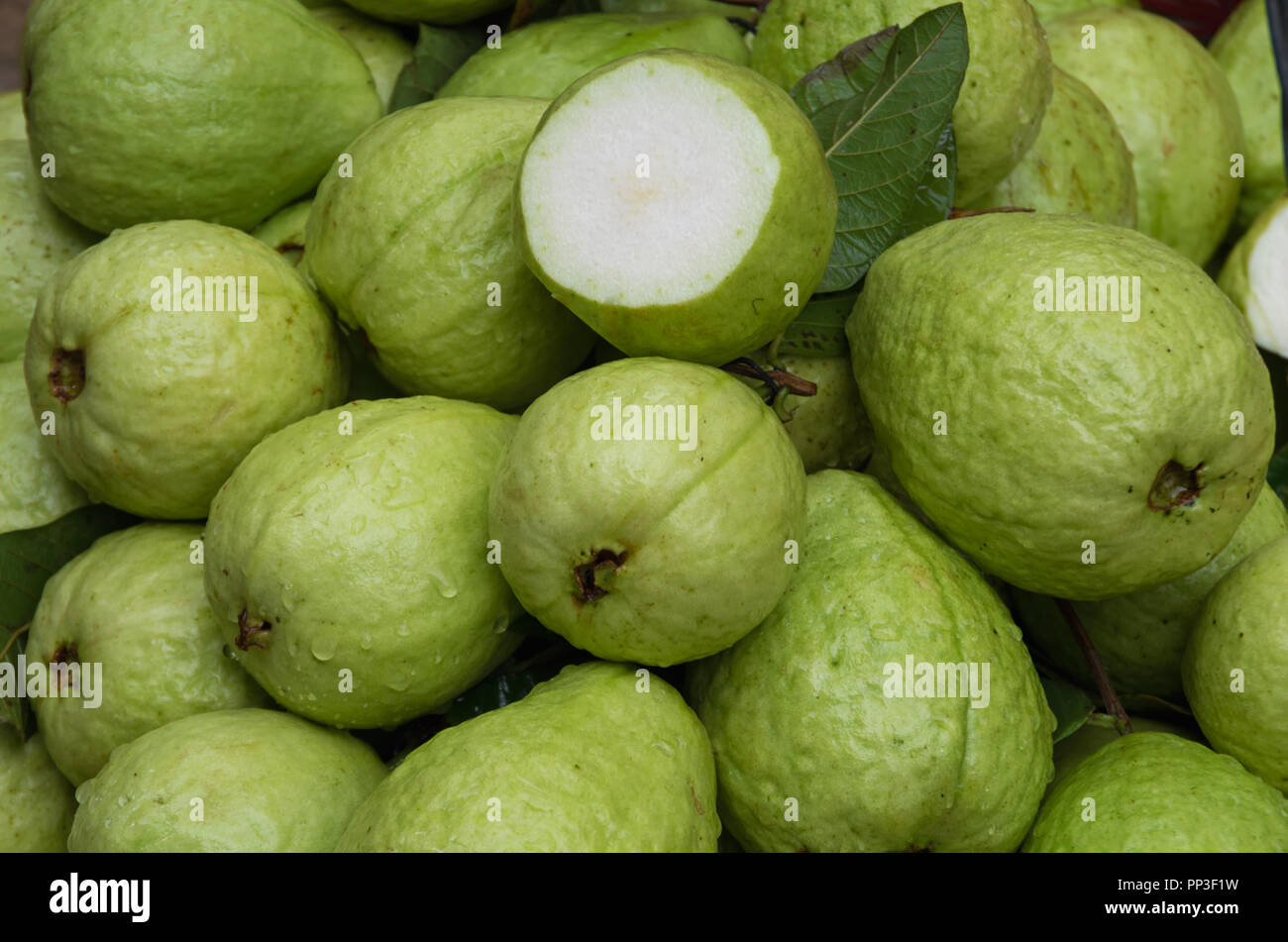 Background with guava fruit grown in tropics, picture use