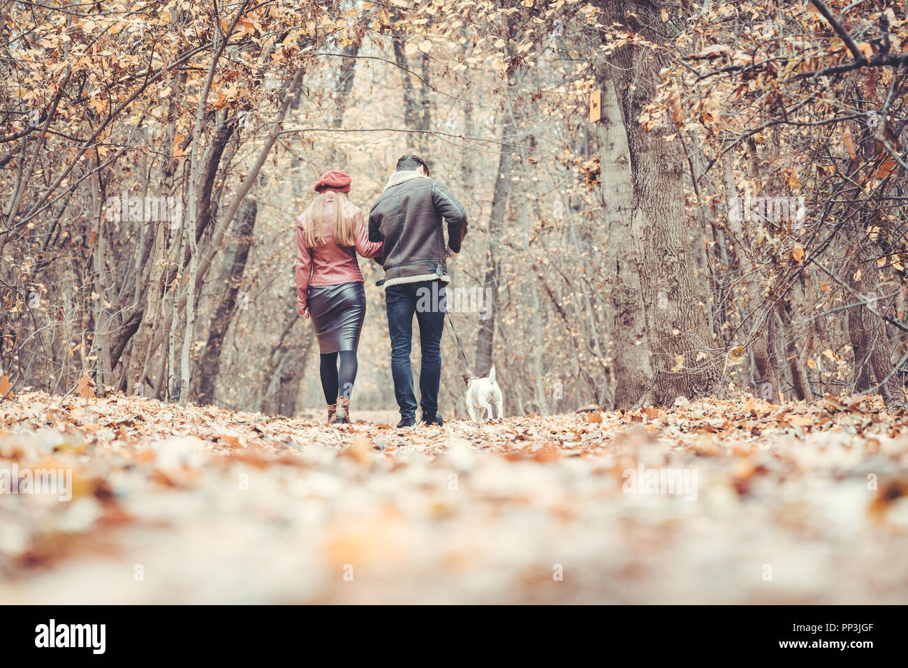 Woman and man in the fall strolling with their dog in the park - Stock Image
