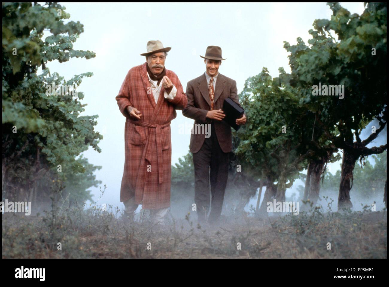Prod DB © 20th Century Fox / DR LES VENDANGES DE FEU (A WALK IN THE CLOUDS) de Alfonso Arau 1995 USA avec Anthony Quinn et Keanu Reeves brume, promenade, pere et fils, robe de chambre, vignes - Stock Image