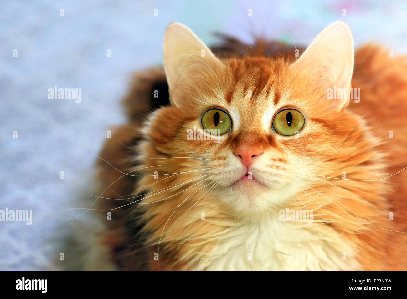 Portrait of a young red-haired cat with flowers - Stock Image