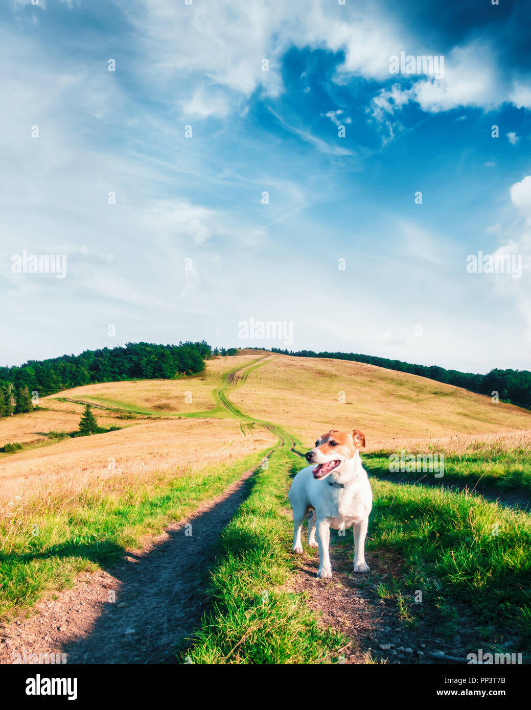 Alone white dog on mountains road against the backdrop of an incredible mountain landscape. Travel concept - Stock Image
