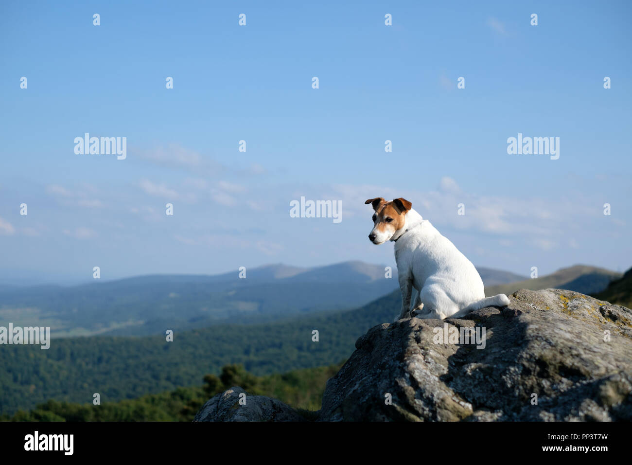 Alone white dog sitting on rock against the backdrop of an incredible mountain landscape - Stock Image