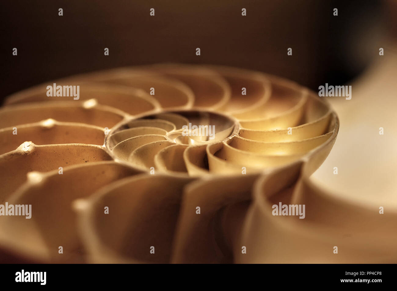 A half nautilus shell in brown and yellow sepia tones in soft focus. - Stock Image