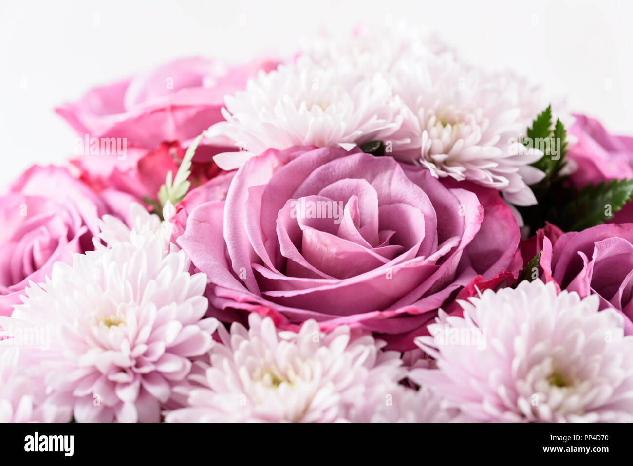 Daisy Flowers And Roses Topsimages