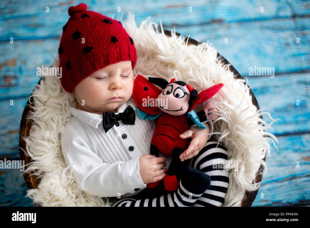 2ff84dafa6b Sleeping Baby Ladybug Stock Photos   Sleeping Baby Ladybug Stock ...