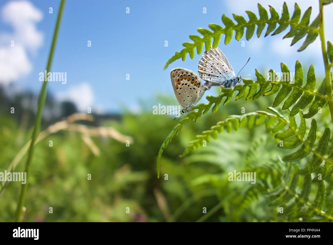 Butterflys - Stock Image