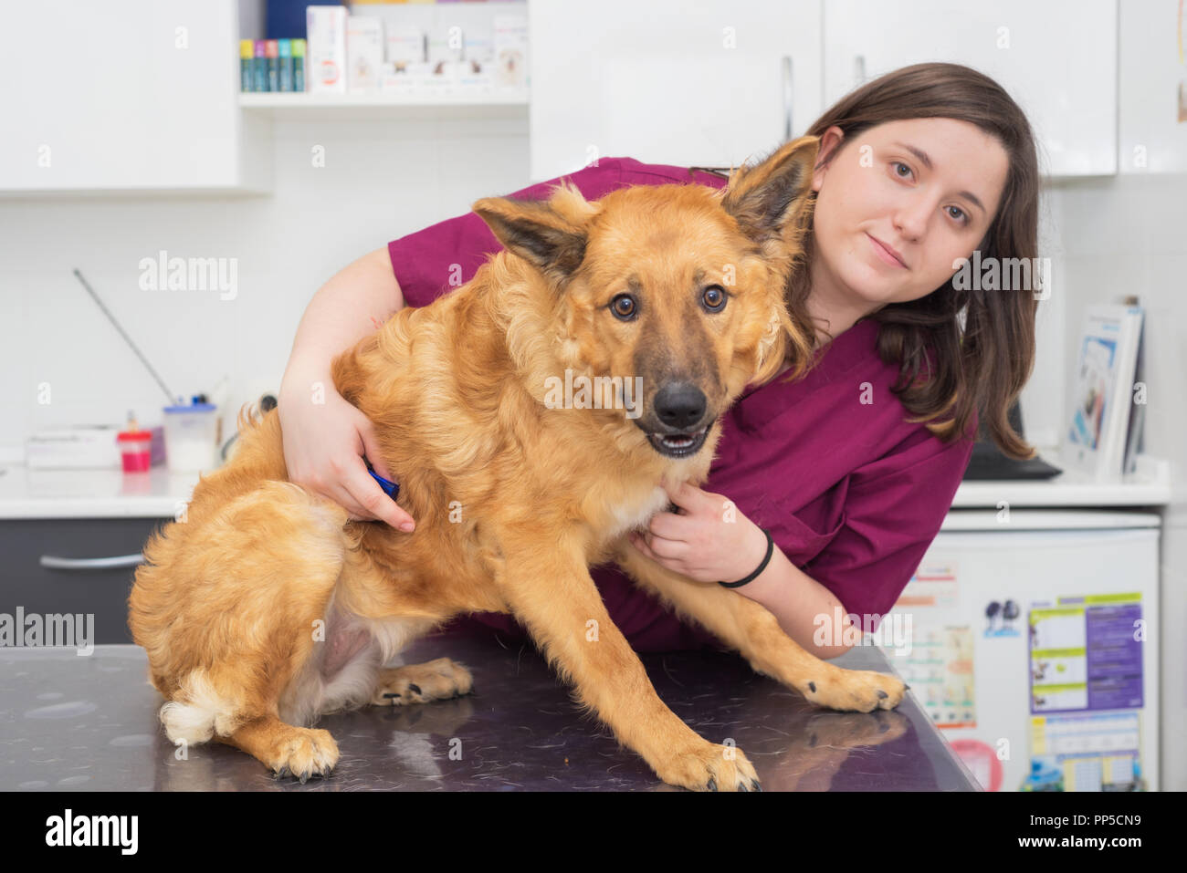 Doctor at the veterinary clinic hugging a beautiful dog - Stock Image