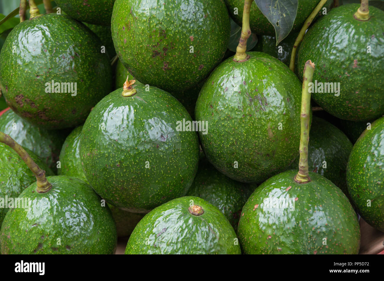 Background with avocados fruit in the asia market, picture use for design, advertising, marketing, business and printing - Stock Image