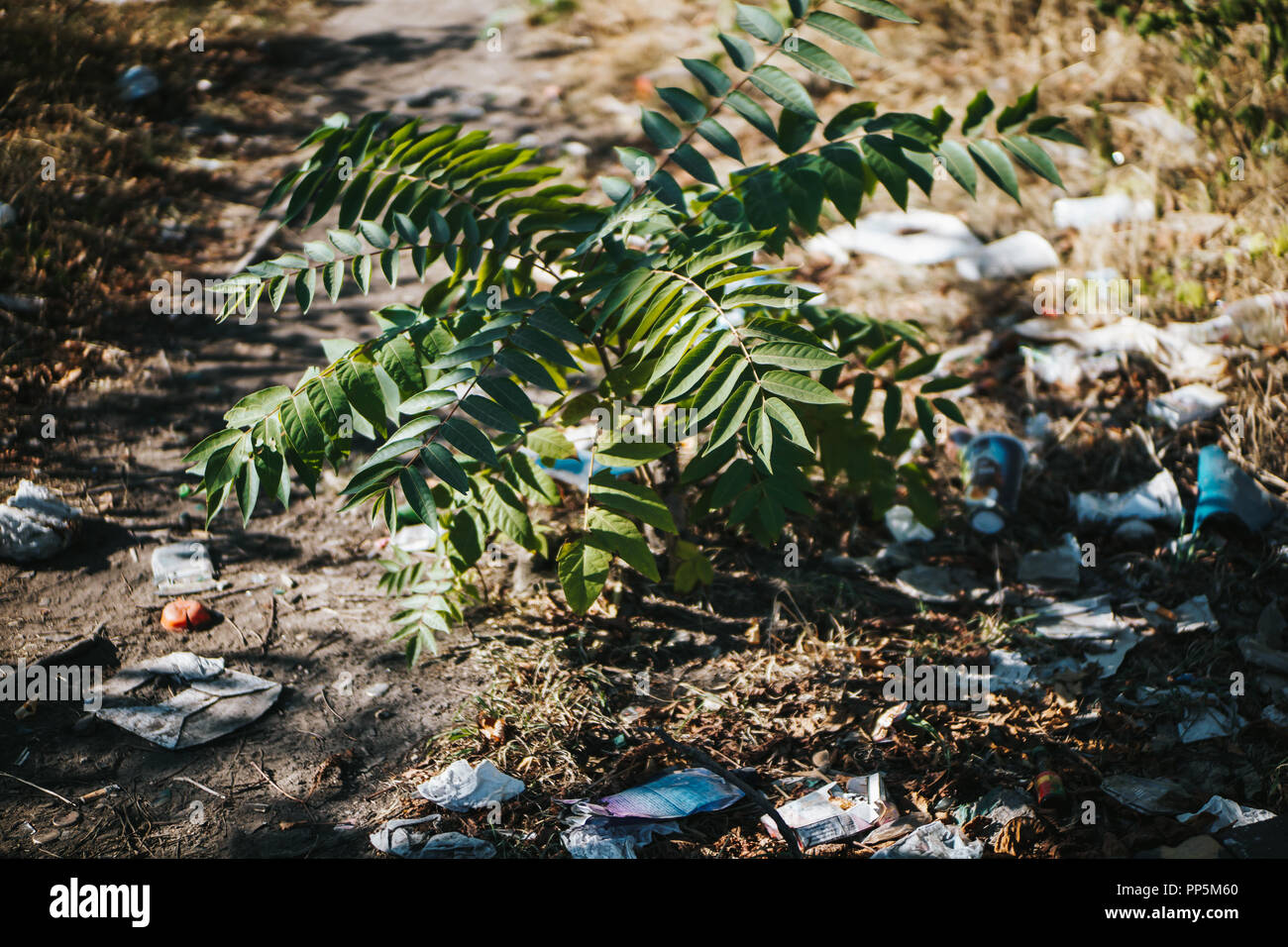 Plant growing in the middle of a path full of plastic garbage Stock Photo