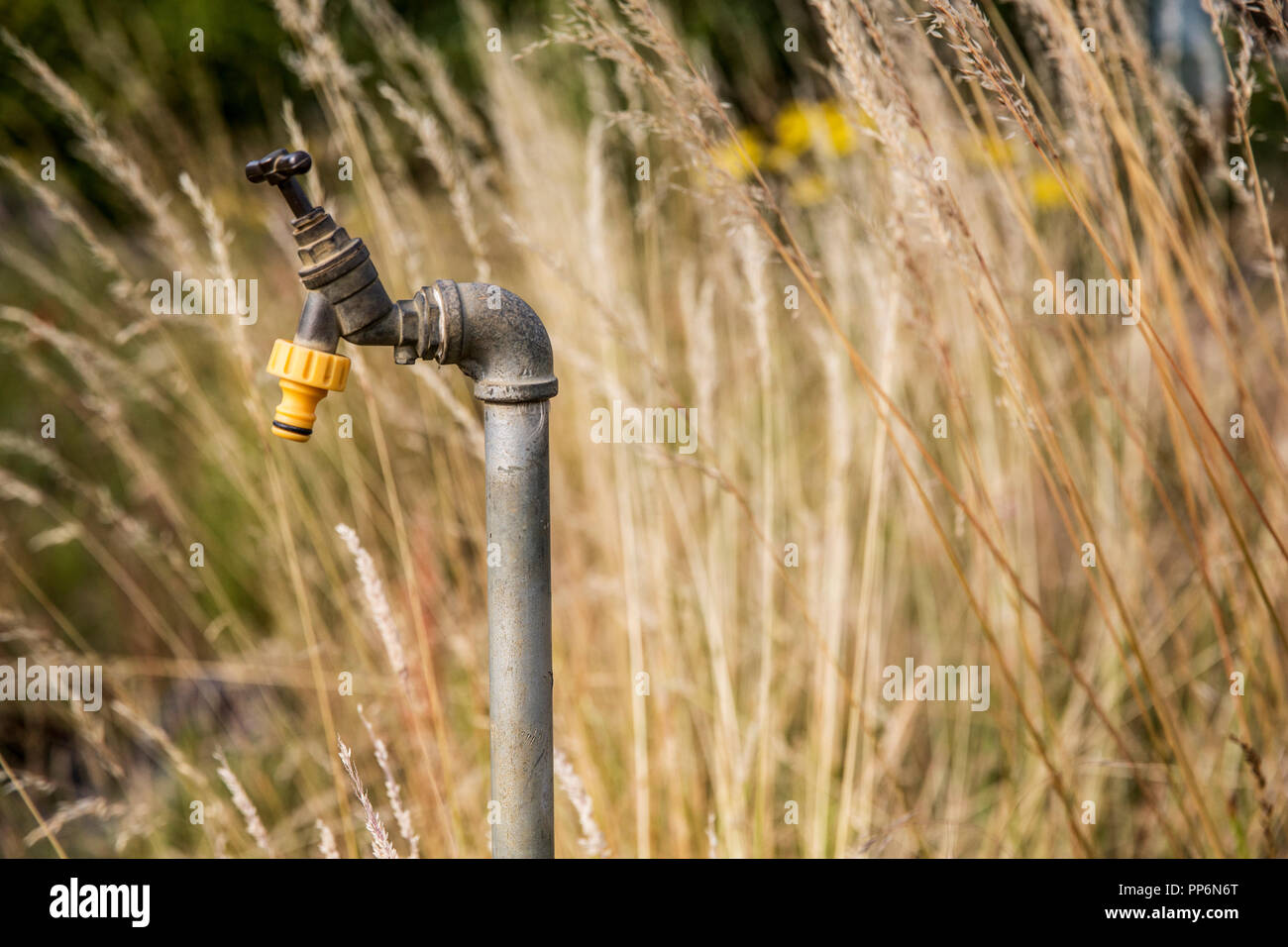 Close up of water tap with yellow plastic hose attachment in an allotment. - Stock Image