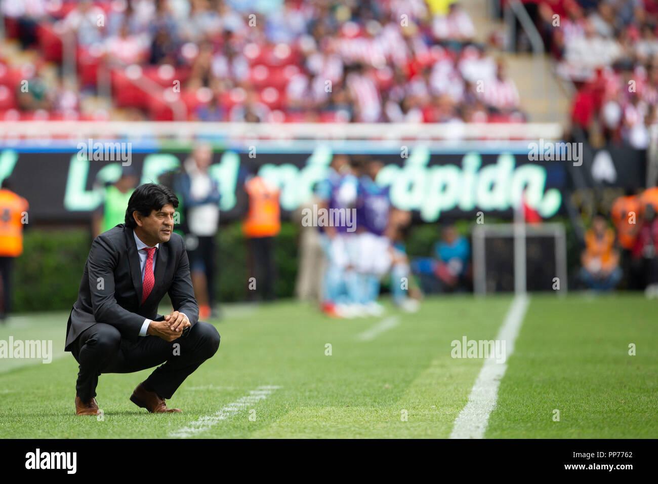 628a318f687 Chivas' head coach Jose Cardozo during the Mexican Apertura Tournament 10th round  match between Chivas