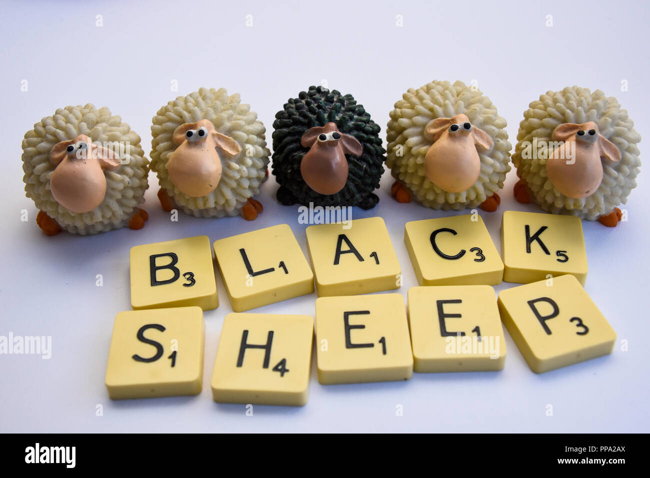 Black sheep among white sheep. Ethnic minority. Odd one out. Lonely. Idiom, conceptual, concept. Colour differences. Wayward, unique - Stock Image