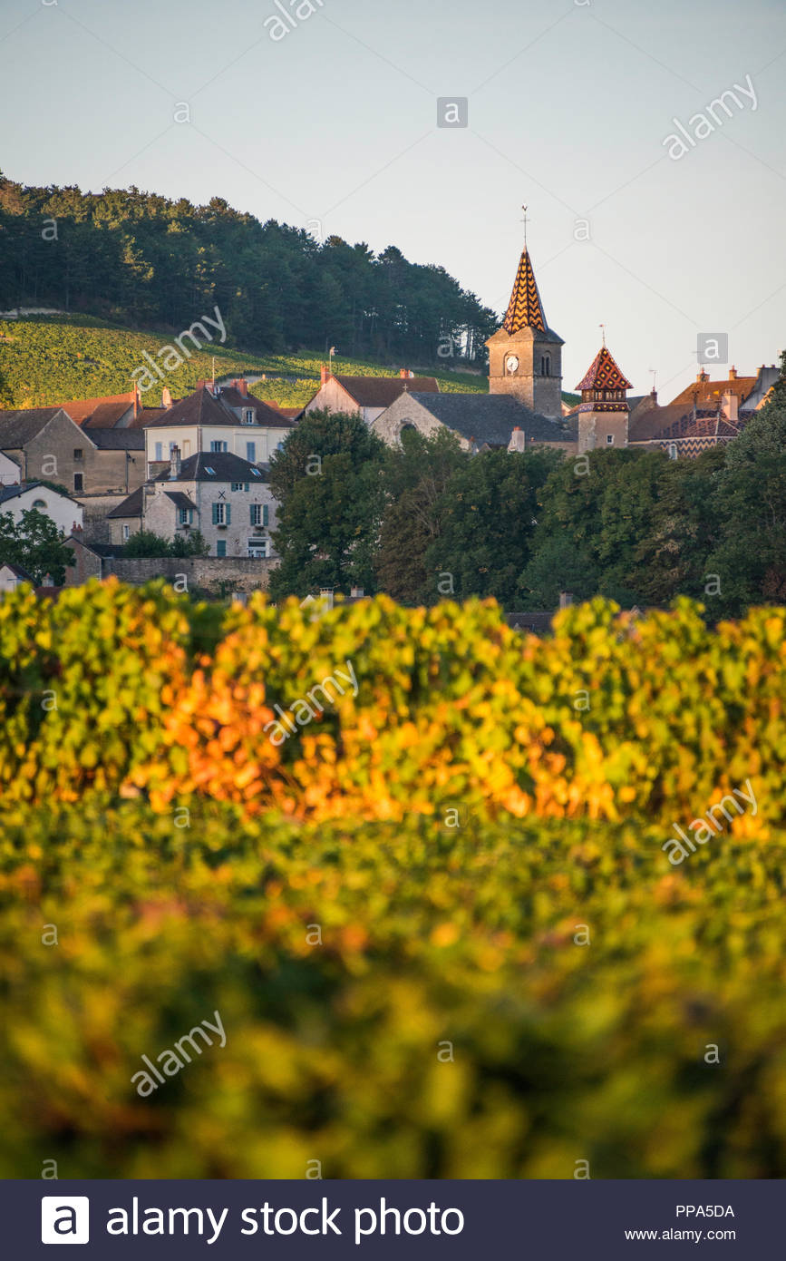 Sunset over the vineyards and church spire at Auxey-Duresses, Auxey-Duresses, Burgundy, France - Stock Image