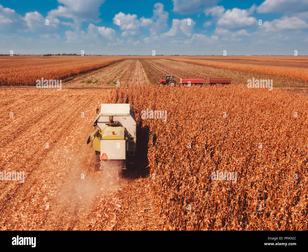 Aerial photography of combine harvester harvesting corn crop field from drone point of view - Stock Image