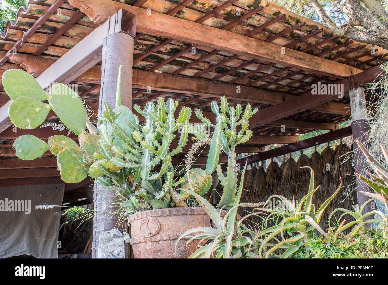 mage of cactus in pots on a terrace with tile roof - Stock Image